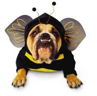Draft_lens1545704module56994432photo_1252795538bee_dog_costume